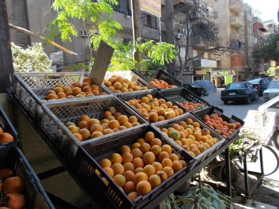 L'Egypte leader dans l'exportation des oranges (photo Safia Ouared)
